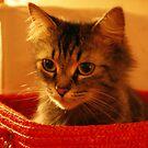 Pretty in a Basket by PPPhotoArt