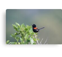 Singing To The Morning Sun Canvas Print