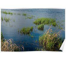Wetland Series, No. 10 Poster