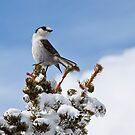 Pretty Bird by Barb White