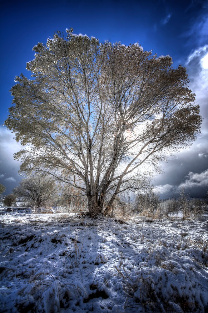 The Cool Side of Trees by Bob Larson