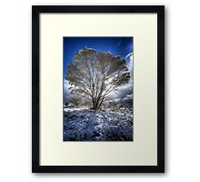 The Cool Side of Trees Framed Print