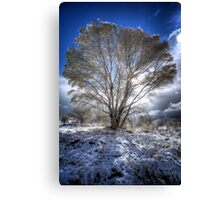 The Cool Side of Trees Canvas Print