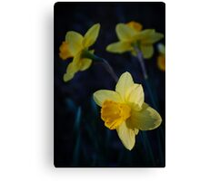 Spring Triplets Canvas Print