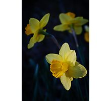 Spring Triplets Photographic Print