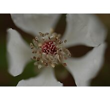Wildflower in Macro Photographic Print