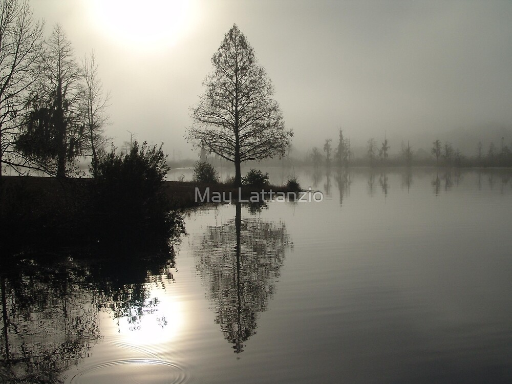 Cypress in the Fog  by May Lattanzio