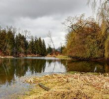 At the Slough 1 by Tracy Friesen