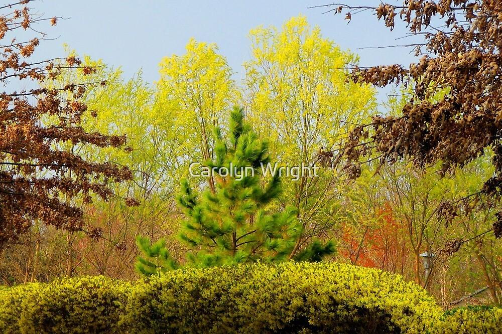 Seasonal Transition by Carolyn Wright