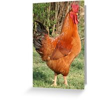Rhode Island Red Rooster Greeting Card
