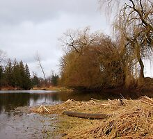 At the Slough 3 by Tracy Friesen