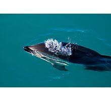 Dusky Dolphin Photographic Print