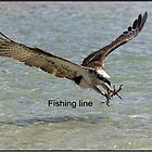 Osprey and Fishing line by John Van-Den-Broeke