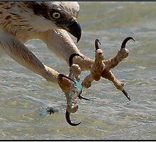 Fishing Line and Osprey by John Van-Den-Broeke