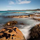 Kelp, Friendly Beaches ,Tasmania by David Jamrozik