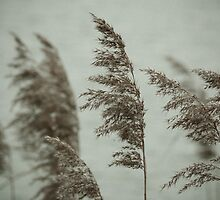 Soft Reeds 2 by redfibres