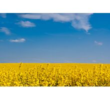 Blue Sky's and Yellow Field Photographic Print