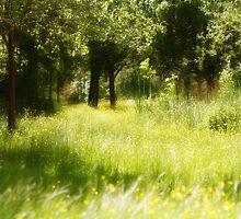 Secret Garden by MartinMuir