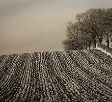 Trees in Winter: ploughed field bordered by oaks by Keith Gooderham