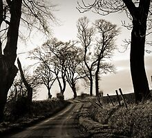 Trees in Winter: the long road back by Keith Gooderham