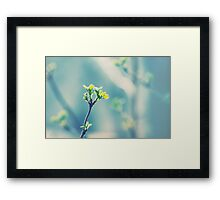First signs of spring... Framed Print