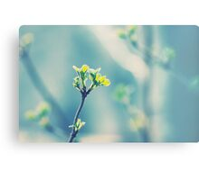 First signs of spring... Canvas Print