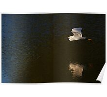 Into the Light - Snowy Egret Poster