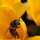 Taste of Spring by TriciaDanby