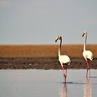 Flamingos by Gideon du Preez Swart