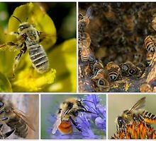 Our Lovely, Life Sustaining Pollinators by Betsy  Seeton