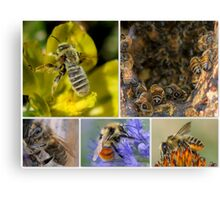 Our Lovely, Life Sustaining Pollinators Canvas Print