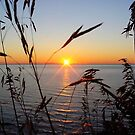 Sunset Through the Beach Grasses by BarbL
