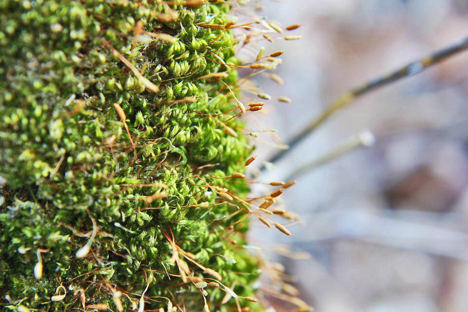 Moss Number 2 by purplehoodie1