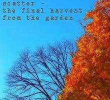 autumn trees by gatheringwonder