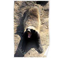 Badger boy! Poster