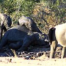 elephant mud bath by Greg Parfitt