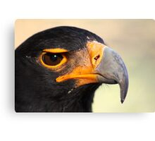 Verraux's or Black eagle.  Canvas Print