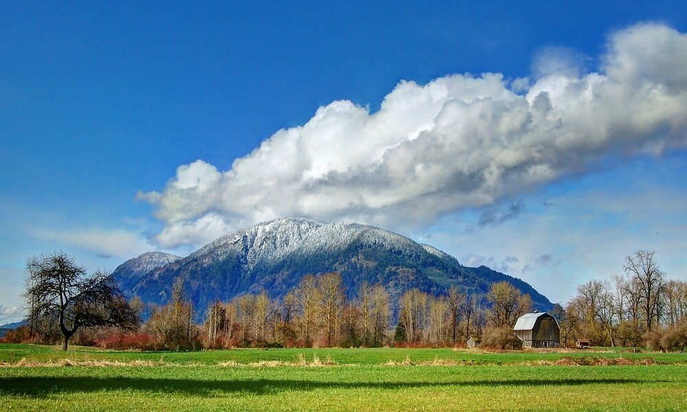The Perfect Back Yard by Tracy Friesen