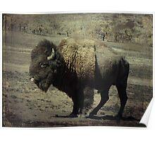 where the buffalo roam Poster