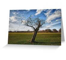 Tree HDR Greeting Card