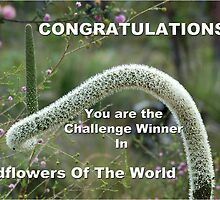Wildflowers Of The World Banner Entry # 2 by Eve Parry