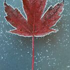Frosted Leaf by Bromoson Photography