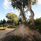 Tree by julie anne  grattan