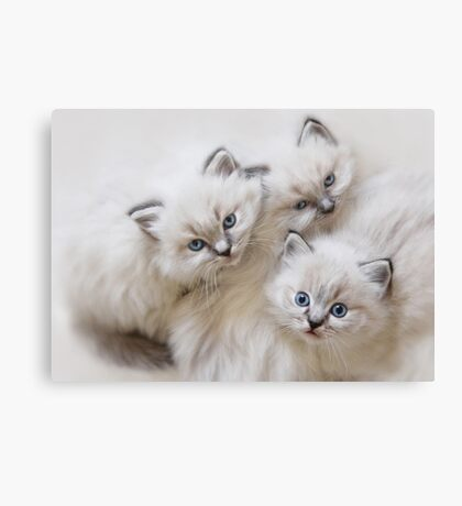 Baby Faces Canvas Print