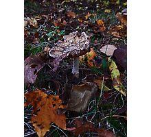 Mushroom Kingdom (3919) Photographic Print