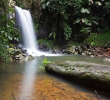 Curtis Falls, Mt Tamborine by Larissa Dening