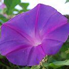 Purple Sun, The Flower, Marbella 2007 by ArleneMartine