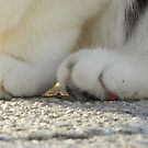 Fuzzy Toes by Heather Crough