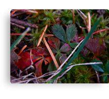 Colorful Vines (3880) Canvas Print