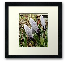 Covered in Dew Framed Print